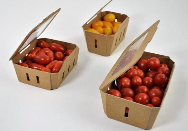 Induser Presents its Tomato Novelties in the I Global Tomato Congress Edition