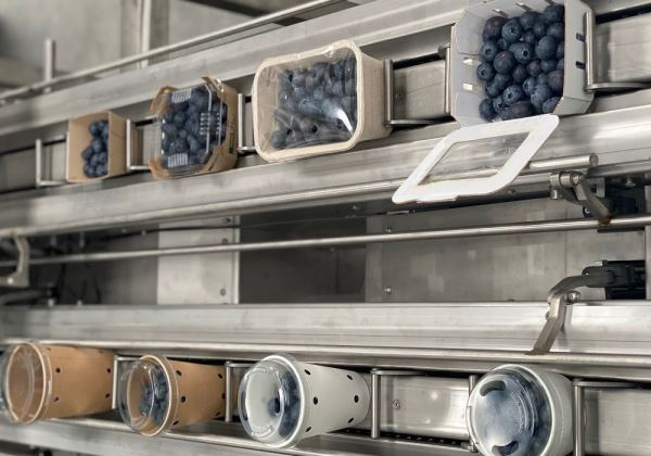 INDUSER launches the sustainable blueberry packing machine. BLUE 3R PACK .