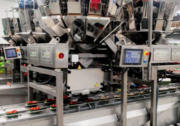 Induser Installs Largest Automated Packaging Line for Organic Spanish Cherry Tomatoes